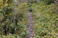 Trayectoria del fango del bosque Foto de archivo libre de regalías