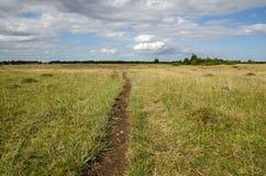 Trayectoria del ganado en una tierra de pasto Foto de archivo