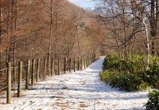 Trayectoria del invierno con los árboles y la cerca Imágenes de archivo libres de regalías