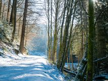 Trayectoria del invierno en el bosque negro con sol imágenes de archivo libres de regalías