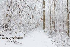 Trayectoria del invierno en un bosque foto de archivo libre de regalías