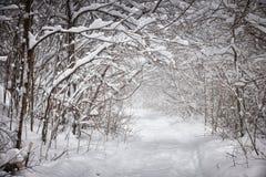 Trayectoria del invierno Nevado en bosque Fotografía de archivo