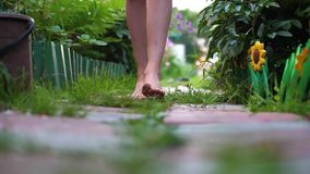Trayectoria del jardín, pies desnudos de primer Sirva caminar a lo largo de la trayectoria a lo largo del jardín de flores en el  metrajes