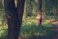 Trayectoria del otoño en un parque con los árboles Imagenes de archivo