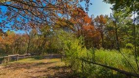 trayectoria del país en otoño con los árboles imagenes de archivo
