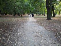 Trayectoria del parque - humor de los ambientes del otoño imágenes de archivo libres de regalías