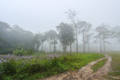 Trayectoria del paseo en bosque de la niebla de la mañana fotos de archivo libres de regalías
