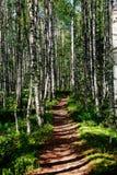 Trayectoria del pie en un bosque del álamo temblón en el parque nacional de Finlandia Fotos de archivo