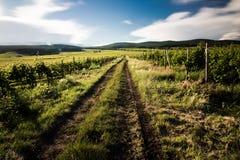Trayectoria del vino Imagenes de archivo