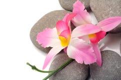 Trayectoria del zen Fotografía de archivo libre de regalías