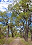 Trayectoria en Australia occidental Bush Fotografía de archivo