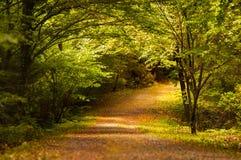 Trayectoria en bosque Imagenes de archivo