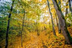 trayectoria en bosque de la caída fotos de archivo