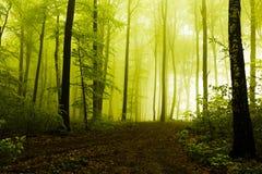 Trayectoria en bosque de niebla hermoso Fotografía de archivo