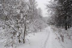 Trayectoria en bosque del invierno Imágenes de archivo libres de regalías