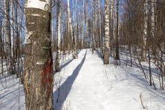 Trayectoria en bosque del invierno Fotografía de archivo