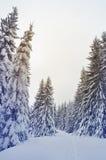 Trayectoria en bosque del invierno Foto de archivo