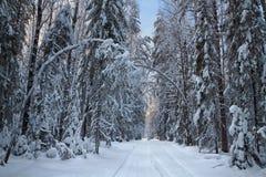 Trayectoria en bosque del invierno Fotos de archivo libres de regalías