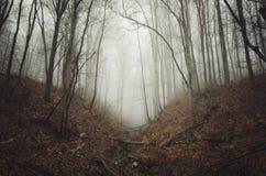 Trayectoria en bosque frecuentado misterioso con niebla Fotos de archivo libres de regalías
