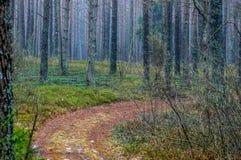 Trayectoria en bosque en la caída foto de archivo