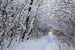 Trayectoria en derivas de la nieve a través de los árboles Fotografía de archivo