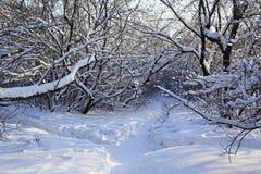 Trayectoria en derivas de la nieve a través de los árboles Imagen de archivo