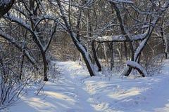 Trayectoria en derivas de la nieve a través de los árboles Imagenes de archivo
