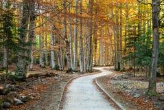 Trayectoria en el bosque Imagen de archivo
