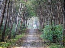 trayectoria en el bosque Imagenes de archivo