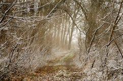 trayectoria en el bosque Fotografía de archivo