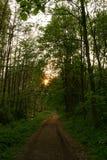 Trayectoria en el bosque Foto de archivo libre de regalías