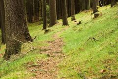 Trayectoria en el bosque Fotografía de archivo libre de regalías