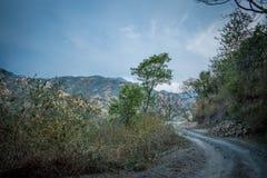 Trayectoria en el bosque 2 Imagen de archivo