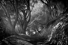 trayectoria en el bosque Fotos de archivo libres de regalías