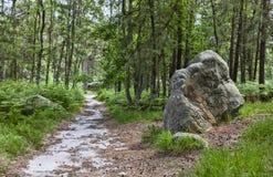 Trayectoria en el bosque de Fontainebleau Foto de archivo libre de regalías