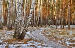 Trayectoria en el bosque del abedul del otoño Foto de archivo