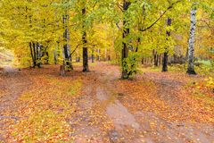 Trayectoria en el bosque del otoño Fotografía de archivo