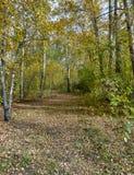 Trayectoria en el bosque del otoño Fotos de archivo