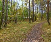 Trayectoria en el bosque del otoño Imagenes de archivo