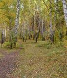 Trayectoria en el bosque del otoño Imagen de archivo libre de regalías