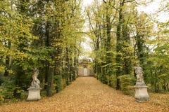 Trayectoria en el bosque del otoño Foto de archivo libre de regalías