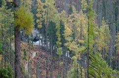 Trayectoria en el bosque del pino a un pequeño río en las montañas foto de archivo