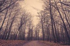 Trayectoria en el bosque en el amanecer Foto de archivo libre de regalías