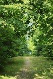 Trayectoria en el bosque entre los árboles Imagen de archivo
