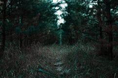 Trayectoria en el bosque joven fotografía de archivo libre de regalías