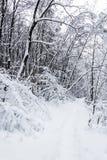 Trayectoria en el bosque nevoso fotografía de archivo
