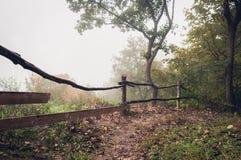 Trayectoria en el bosque oscuro brumoso fotografía de archivo