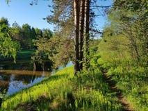 Trayectoria en el bosque R?o en primavera hermosa del bosque de la primavera fotografía de archivo libre de regalías