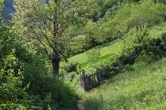 Trayectoria en el bosque rico de la primavera de Rumania Imágenes de archivo libres de regalías
