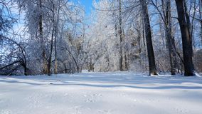 Trayectoria en el bosque un paisaje nevoso foto de archivo libre de regalías